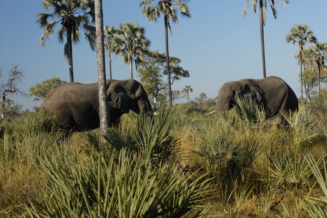 Five Things to Know About Botswana's Decision to Lift Ban on Hunting Elephants
