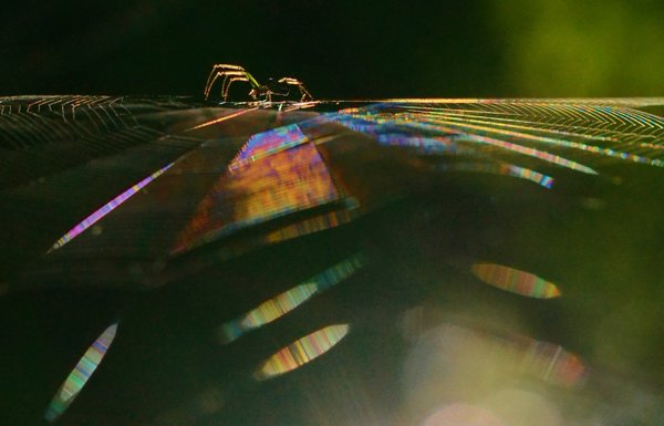 Spider and web with prismatic colors. thumbnail