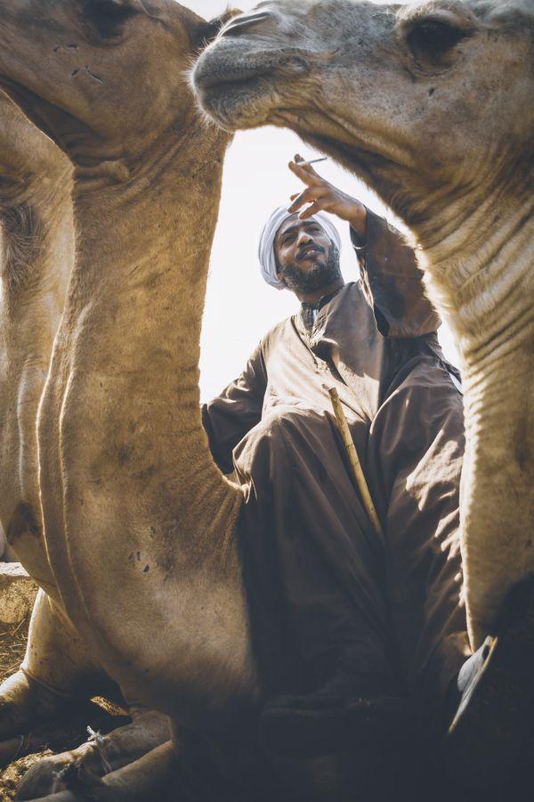 camel seller thumbnail