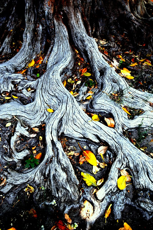 Spanish Roots thumbnail
