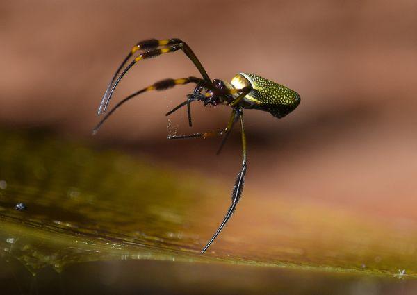 Levitating Spider thumbnail