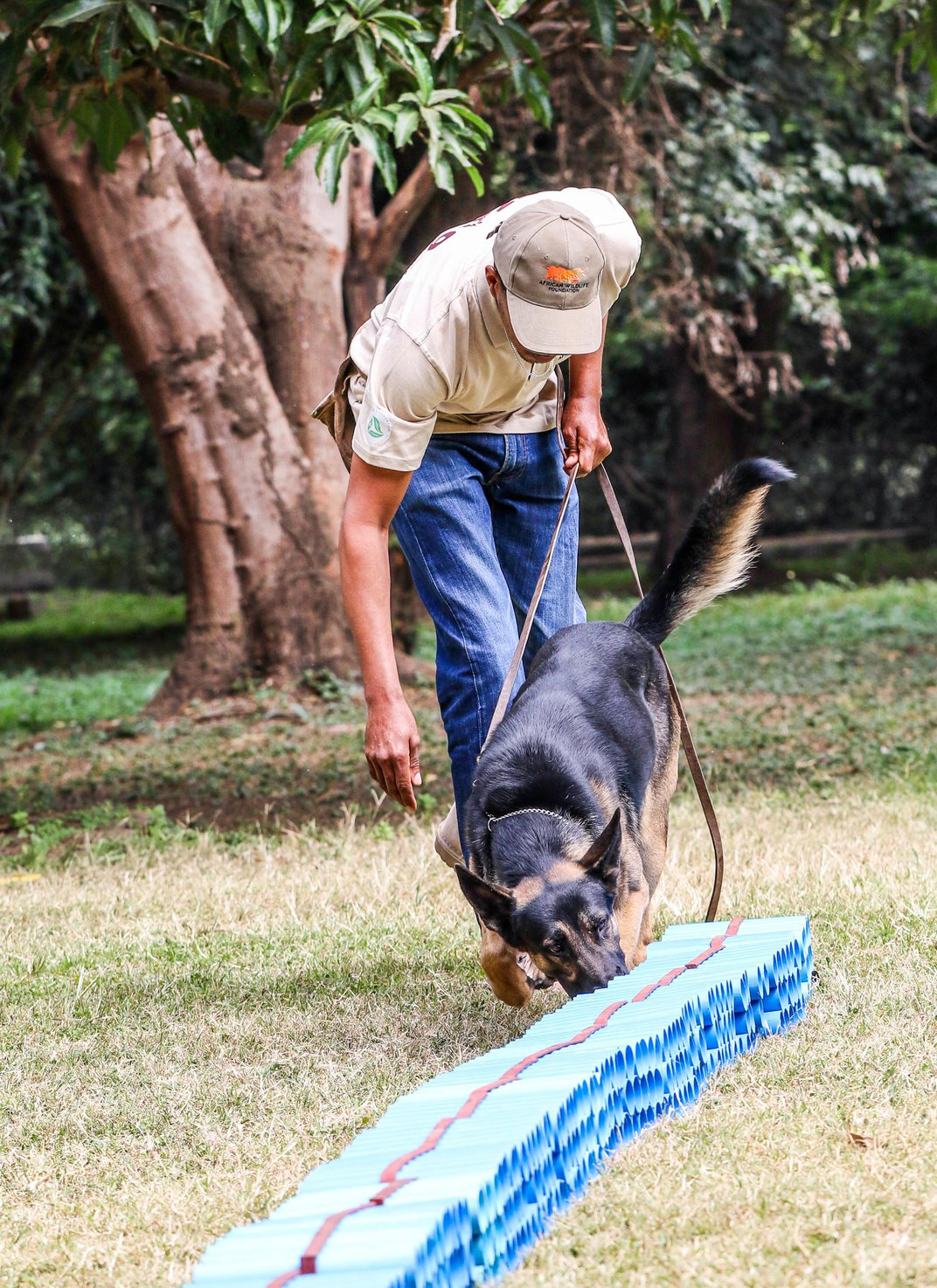 It's Pooches vs. Poachers in the Fight Against Wildlife Smugglers