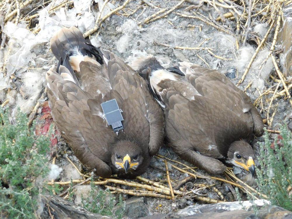 Texting Eagles