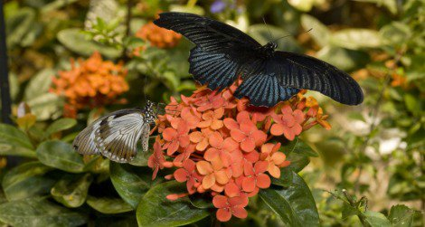 Visit the Butterfly Pavilion at the Natural History Museum