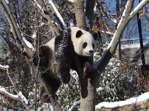 panda-2.jpg