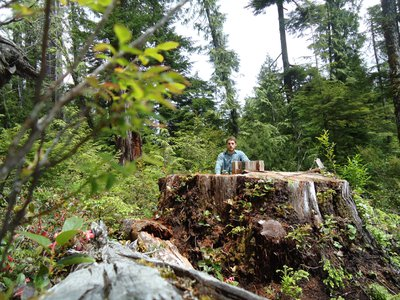 Torrance Coste of the Wilderness Committee illustrates the immensity of the missing Carmanah cedar in 2012.