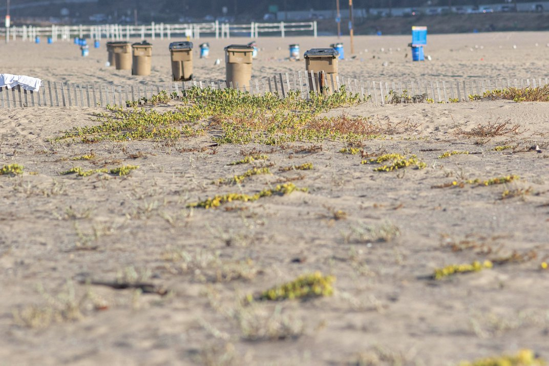 Are We Grooming Beaches to Death?
