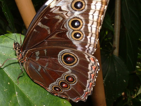 All eyes are on the butterfly thumbnail