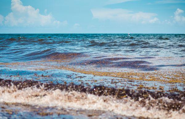 Pompano Beach with Algae thumbnail