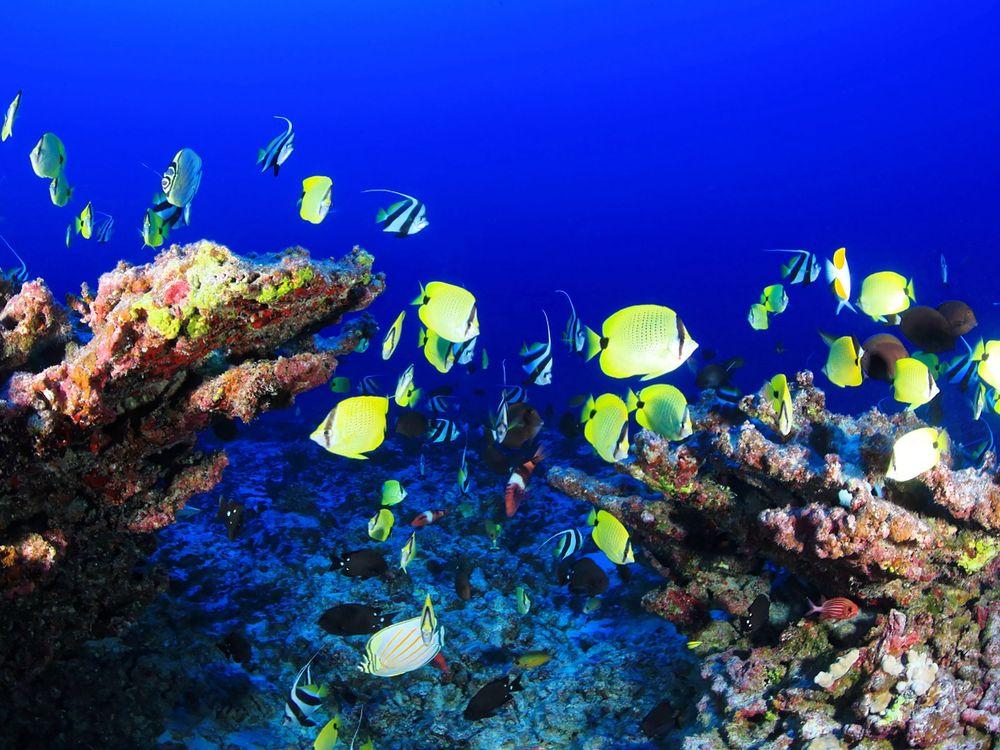 coral-reef-954057_1280.jpg