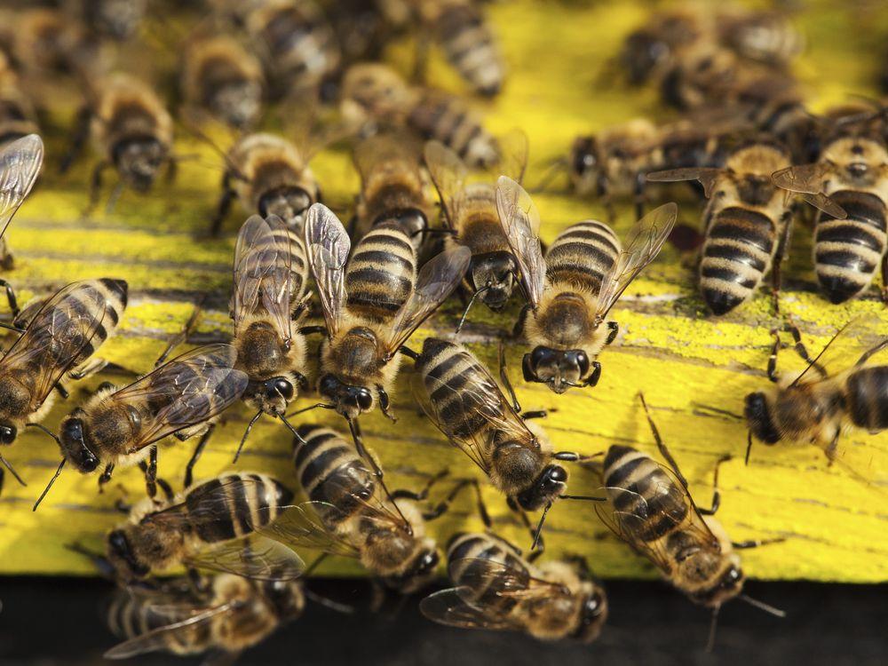 Bee biodiversity farming