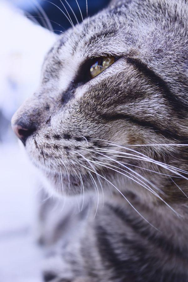 kucing belang thumbnail