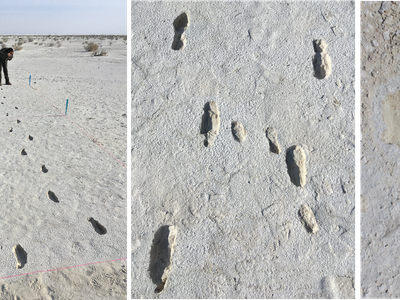The footprints found at White Sands National Park are more than 10,000 years old.