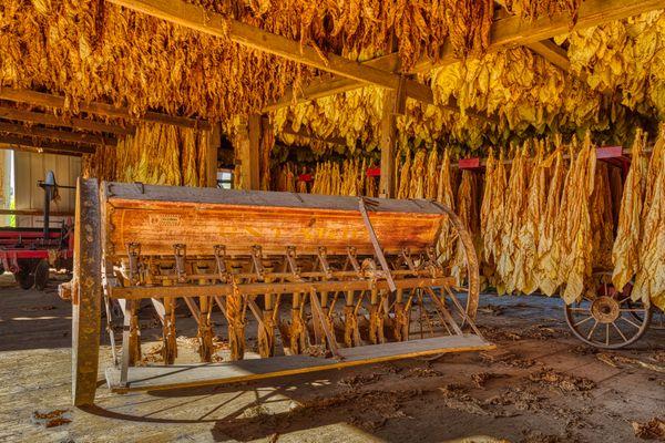 Amish Gold thumbnail