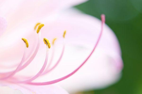 A Frisky Flower thumbnail