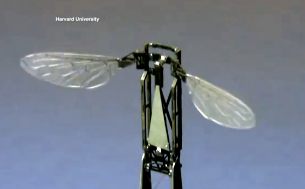 Biomimetic Design Means We'll All Be Living A Bug's Life