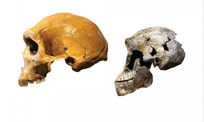 Ancient Human Cousin May Have Lived Alongside Early Homo Sapiens