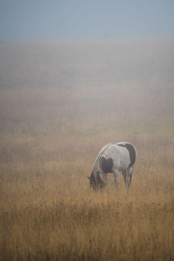 Wild stallion thumbnail