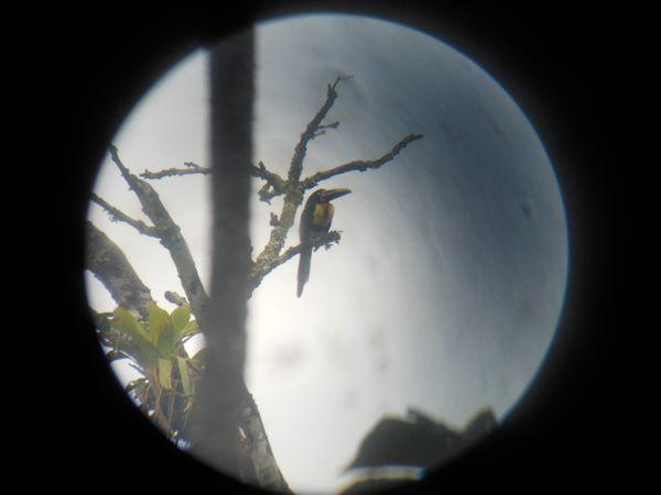 Toucan through a monoscope thumbnail