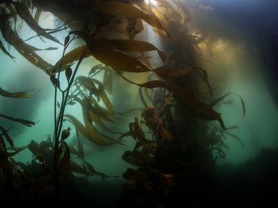 Next time you enjoy some creamy ice cream or zesty salad dressing, thank kelp! (Photo credit: Velvetfish/iStock/Thinkstock)