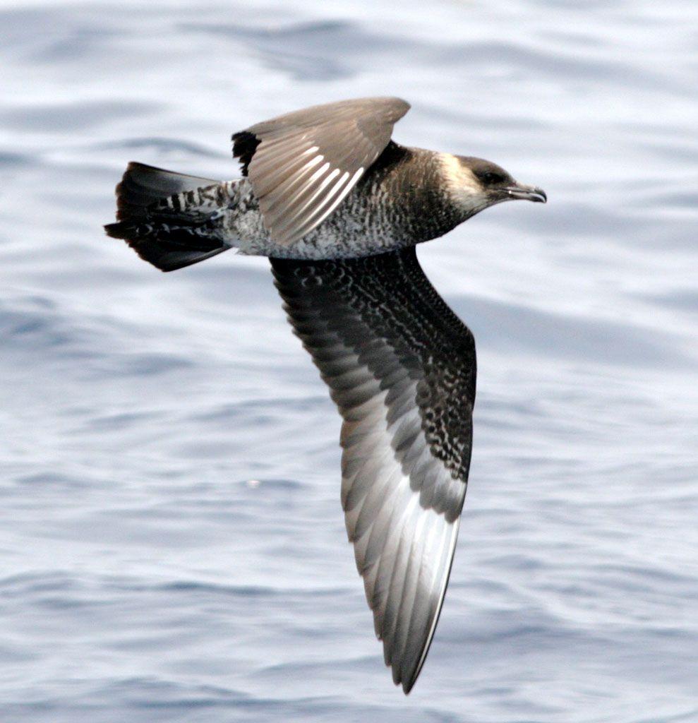 14 Fun Facts About Sea Hawks