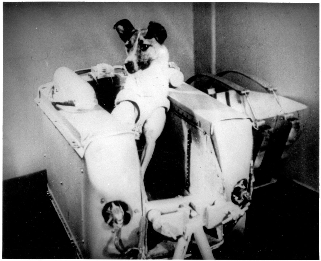 The Most Famous Dogs of Science
