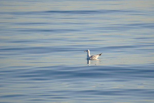 Alone in the sea thumbnail