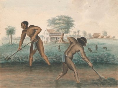 Anonymous, Enslaved Men Digging Trenches, c. 1850