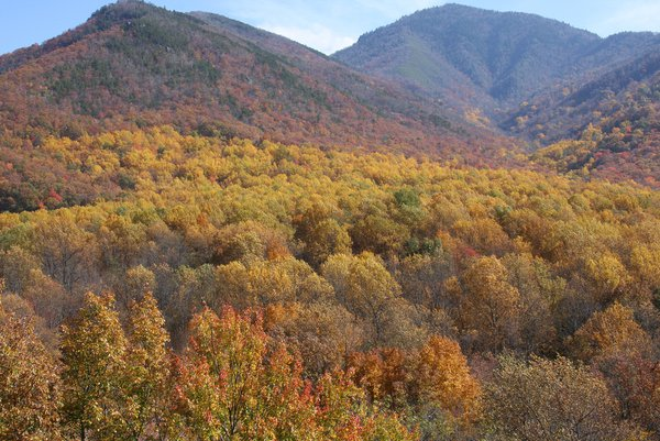 Fall Foilage in Tennessee thumbnail