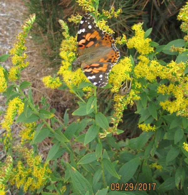 butterfly and grass hopper thumbnail
