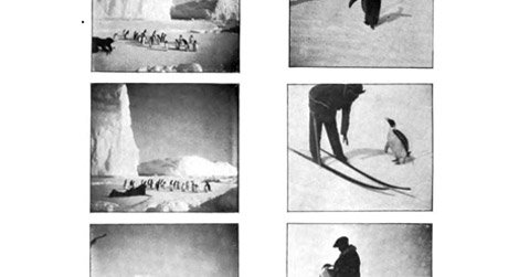 """""""Penguin Interviews,"""" via Frederick Cook's Through the first Antarctic night, 1896-1899."""
