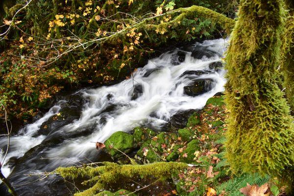 Fishhawk Falls in Autumn thumbnail
