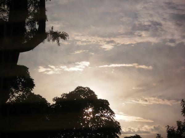 Cloud Series Silhouette Trees  thumbnail