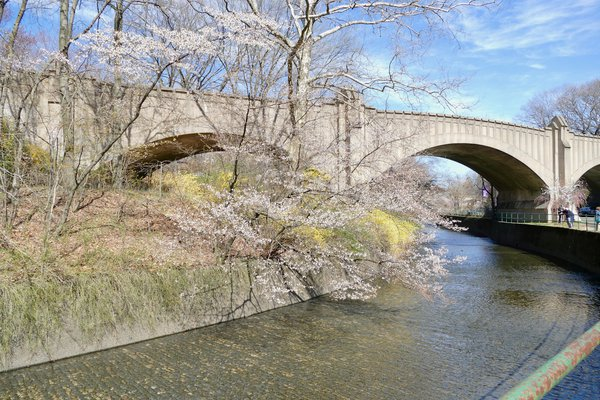 Bridge and cherry blossoms in Branch Brook Park thumbnail