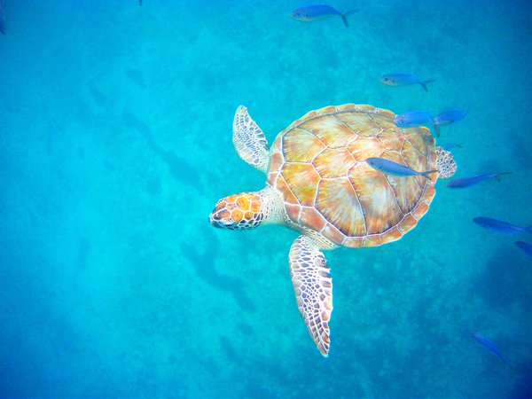 Swimming with the turtle thumbnail