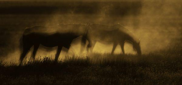 Spirit Horses thumbnail