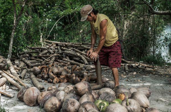 Coconut Farmer thumbnail
