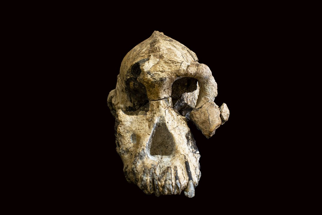 Early human skull on a dark background.