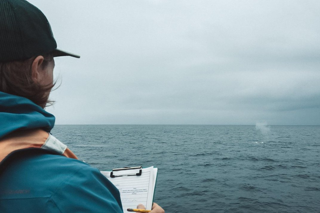 A man wearing a windbreaker jacket and baseball cap stands on a research vessel and takes notes on a clipboard while observing a blue whale in the ocean. The sky is blue-gray and the whale's blow forms a misty cloud above the surface of the deep blue wate