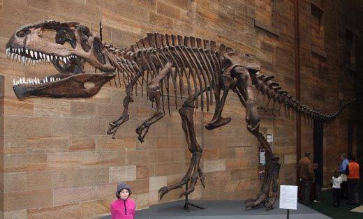 20110520083117giganotosaurus_austmus_email.jpg