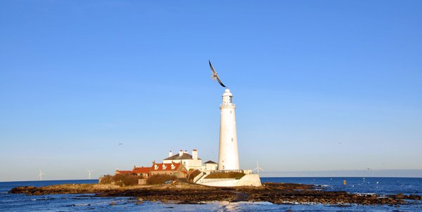 A Seagull flying over St Mary's Island thumbnail