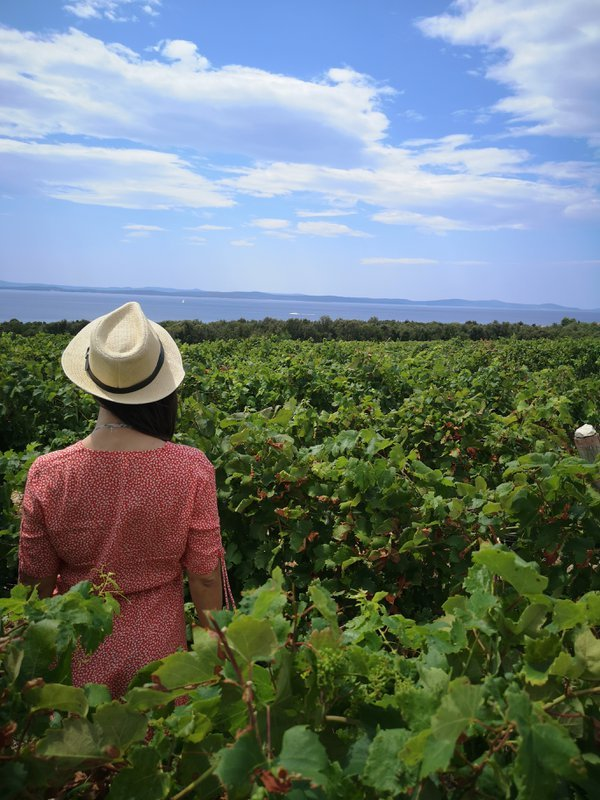 The girl in the vineyard thumbnail