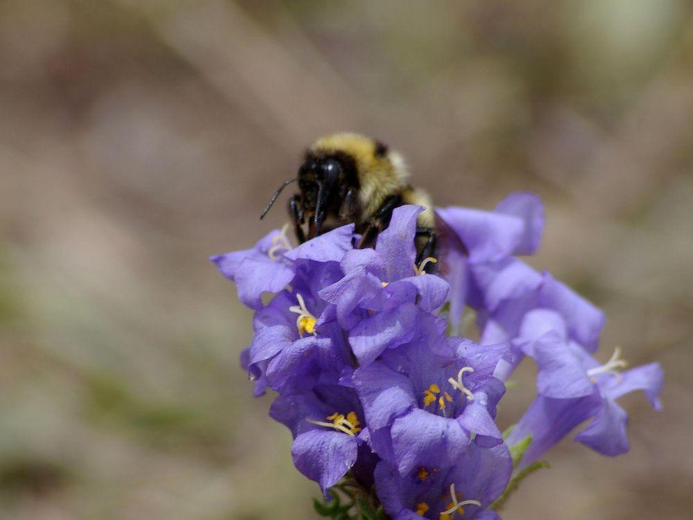 Bee Tongues