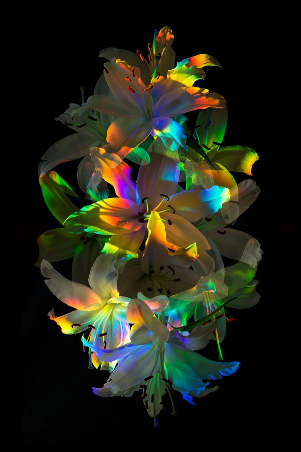 Aurora Florealis thumbnail