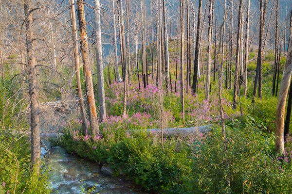 Beauty in a Fallen Forest thumbnail