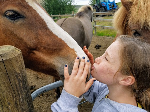 My granddaughter greeting an Icelandic pony.  thumbnail