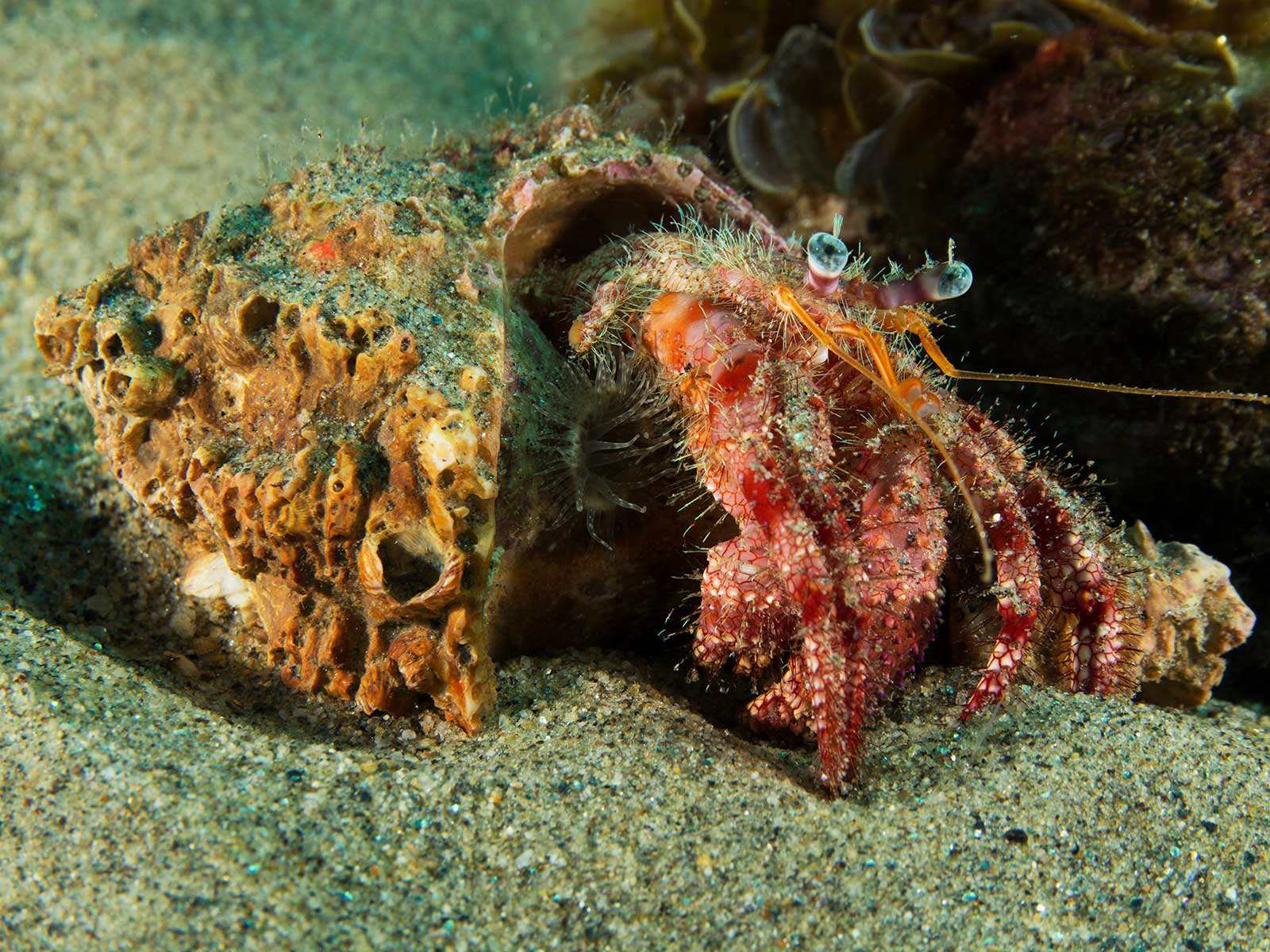 Discarded Tires Are 'Ghost Fishing' Hermit Crabs