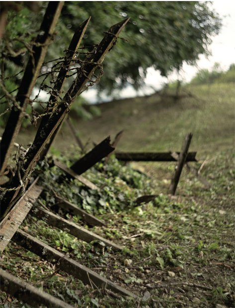 The Scars of World War I