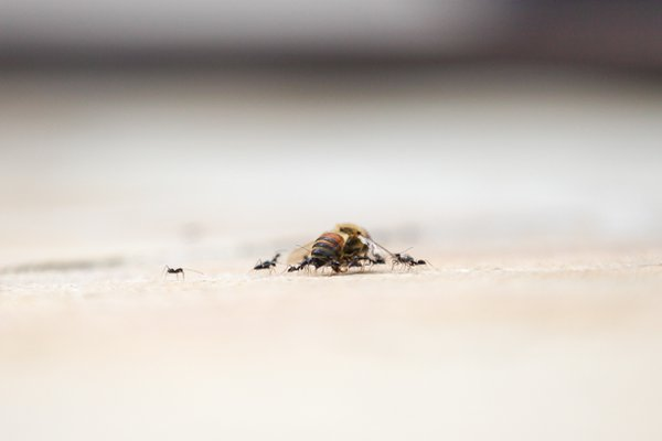Many Ants Make Light Work thumbnail