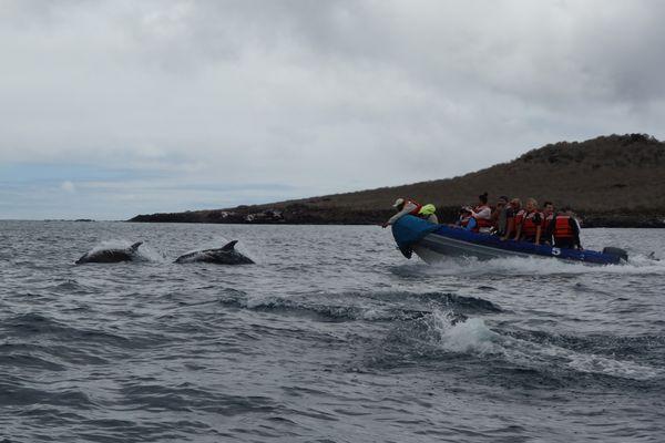 Chasing dolphins in Galapagos thumbnail